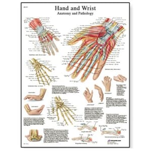 "Plakat anatomisk ""Hand and Wrist"" 50x67cm"