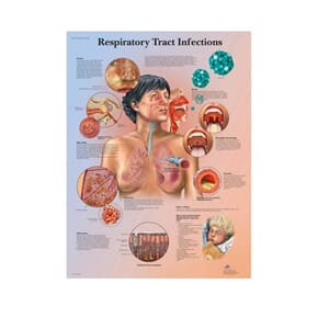 "Plakat anatomisk ""Respiratory Tract Infections"" 50x67cm"