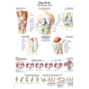 "Plakat anatomisk ""The knee"" 50x70cm"